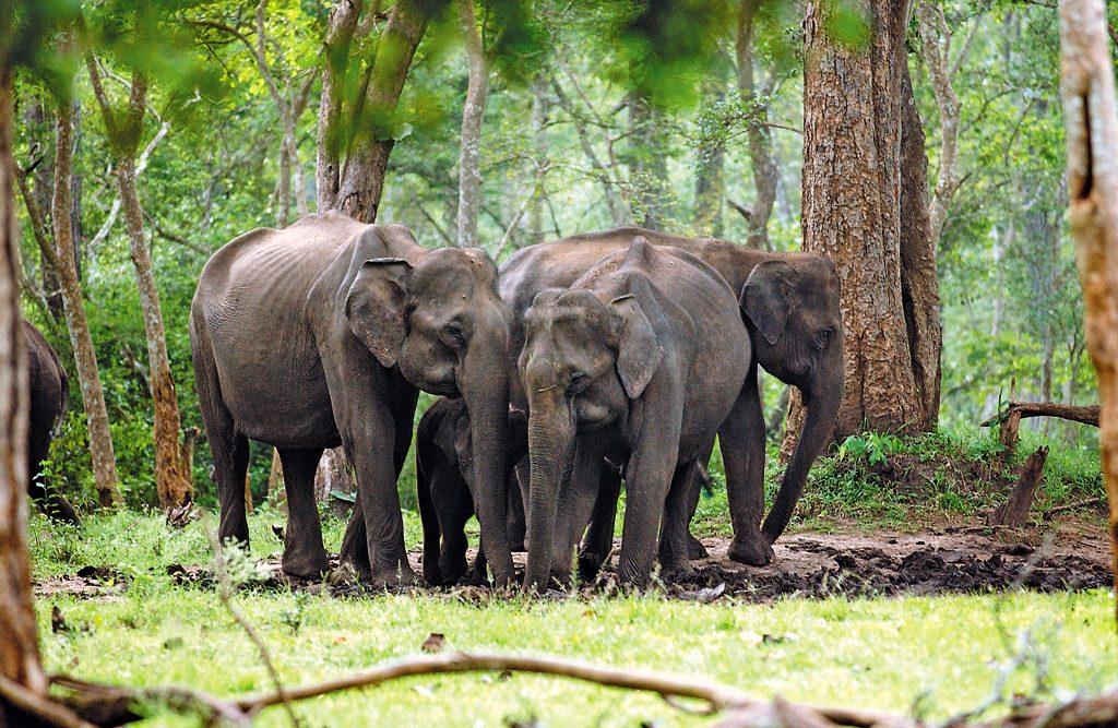 National Parks of India   Symbols of India