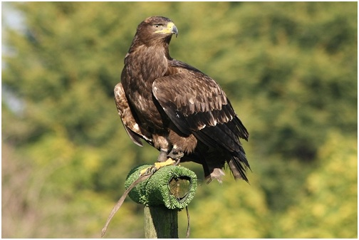 What Is The National Bird of Egypt?