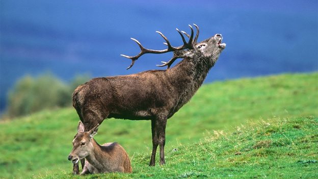 What Is The National Animal of Ireland?