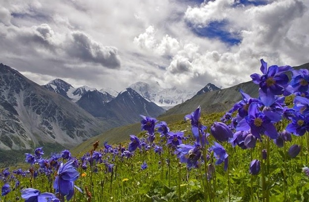 What is the national flower of bhutan whatsanswer what is the national flower of bhutan mightylinksfo