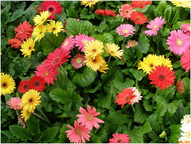 What Is The National Flower of Eritrea?