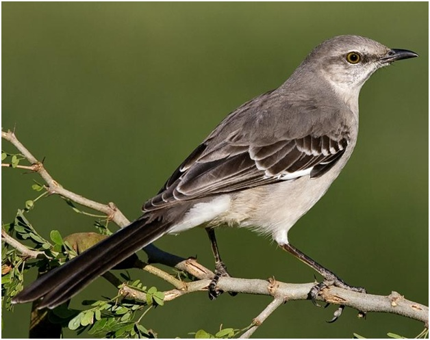What is the Florida State Bird?
