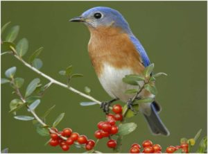 What is the New York State Bird?