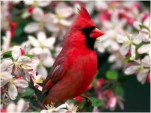 What is the Ohio State Bird?