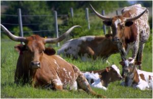 What is the State large mammal of Texas?