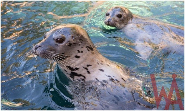 What is the State marine mammal of Rhode Island?