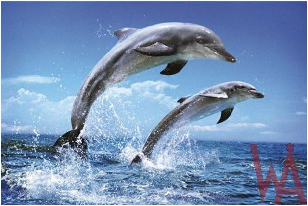 What is the State salt water mammal of Florida?