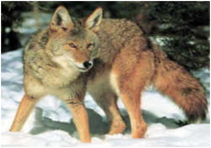 What is the State wildlife animal of Delaware?