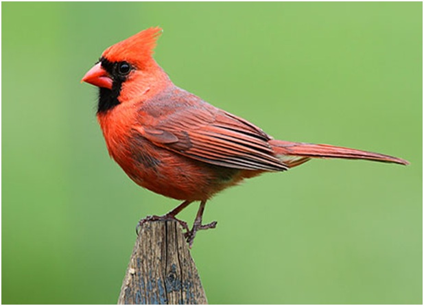 What is the West Virginia State Bird?