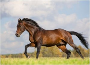 What is the state Horse of Massachusetts?