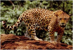 What is the National mammal of Mexico?