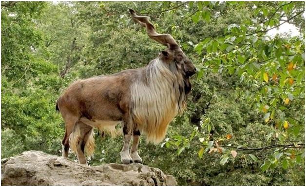 National Animal of Kyrgyzstan