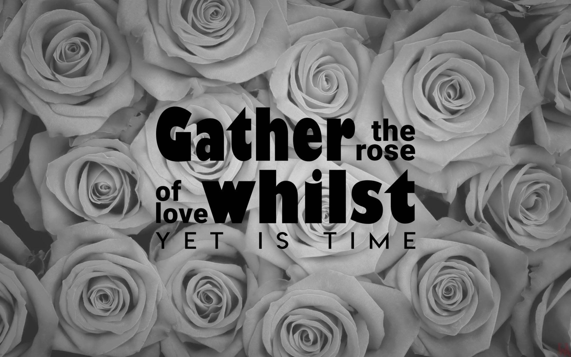 black & white rose HD wallpaper