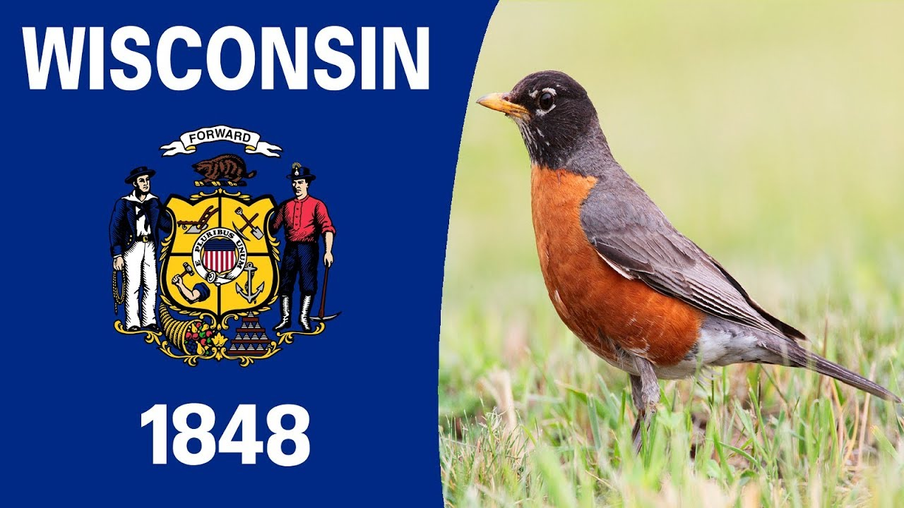State Bird Of Wisconsin