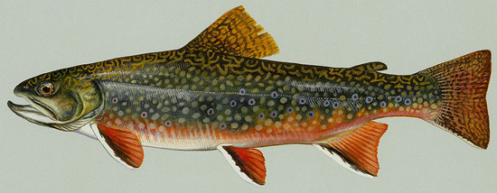 State Fish Of Vermont