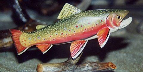 State Fish Of Virginia