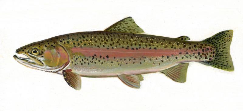 State Fish Of Washington