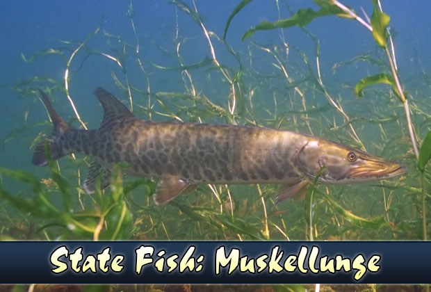 State Fish Of Wisconsin