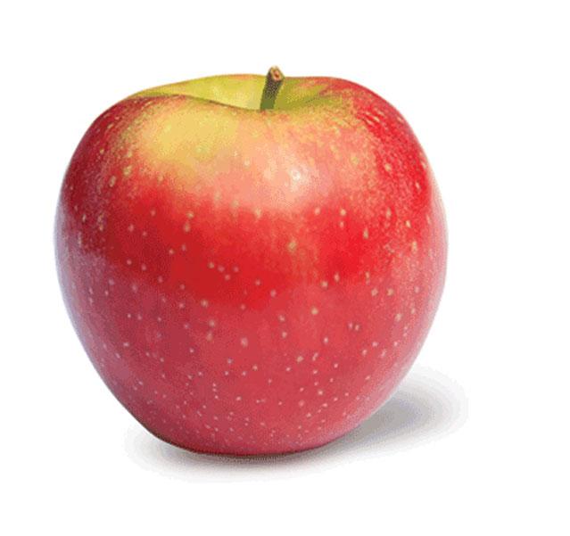 State Fruit Of Washington