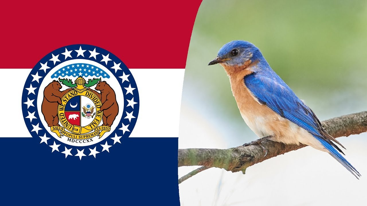 State Bird Of Missouri